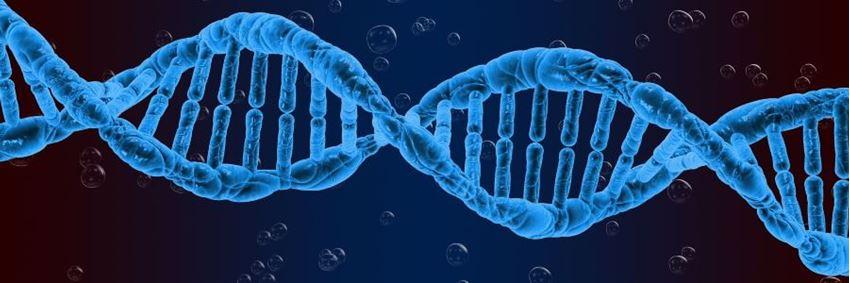 Wat is DNA en wat vertelt een DNA-test precies?