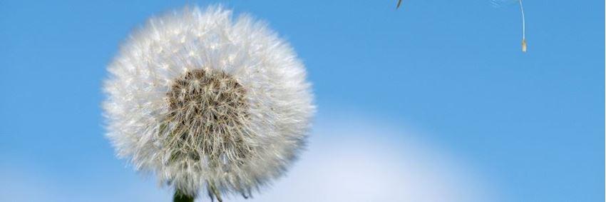 Hoe werken middelen tegen hooikoorts?